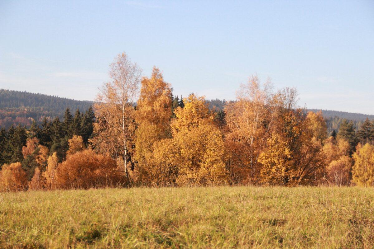 podzim-lesy