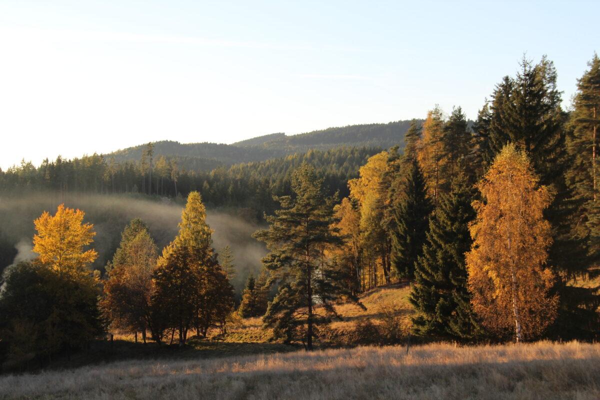 podzim-v-udoli