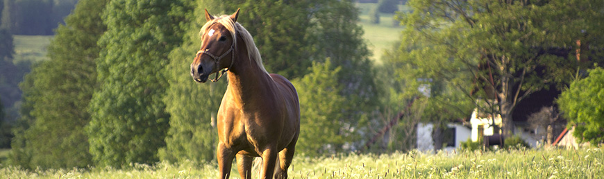 Ustájení koní